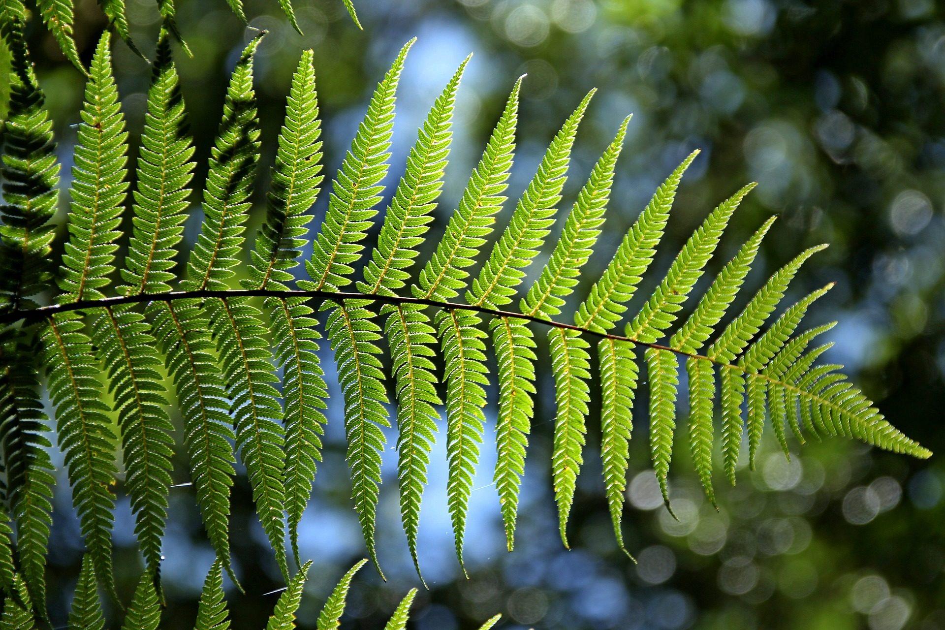 pib verde ecosistema medioambiente hoja recurso bbva