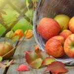 manzana cesta recurso