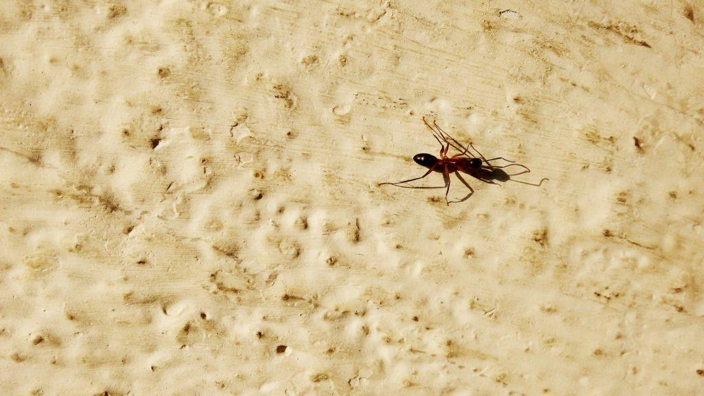 hormiga recurso bbva