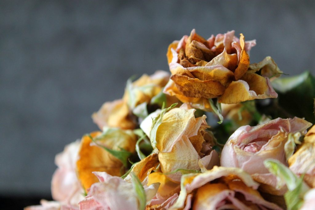 flores recurso