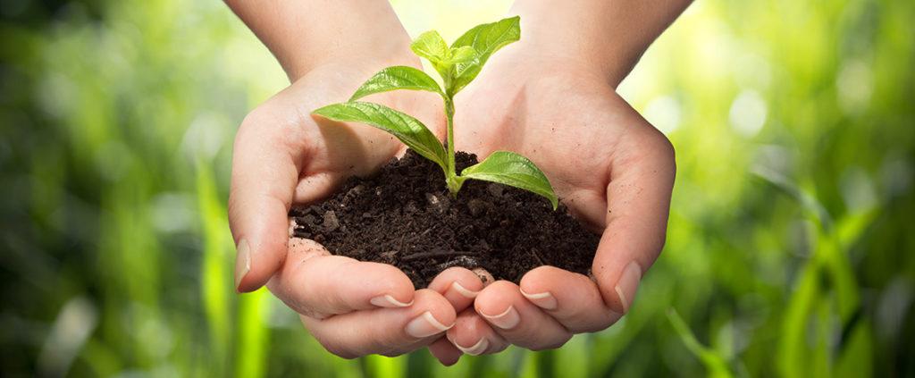 Fotografía de manos naturaleza sostenibilidad ambiente recurso
