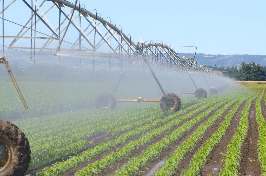 Fotografía innovación agrícola en Argentina-bbva