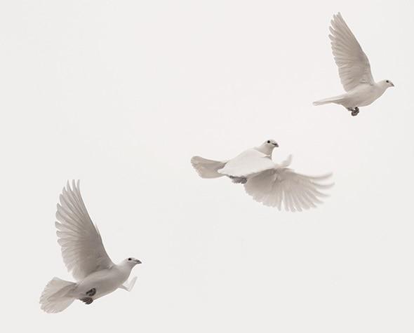 proces-de-paz-portada