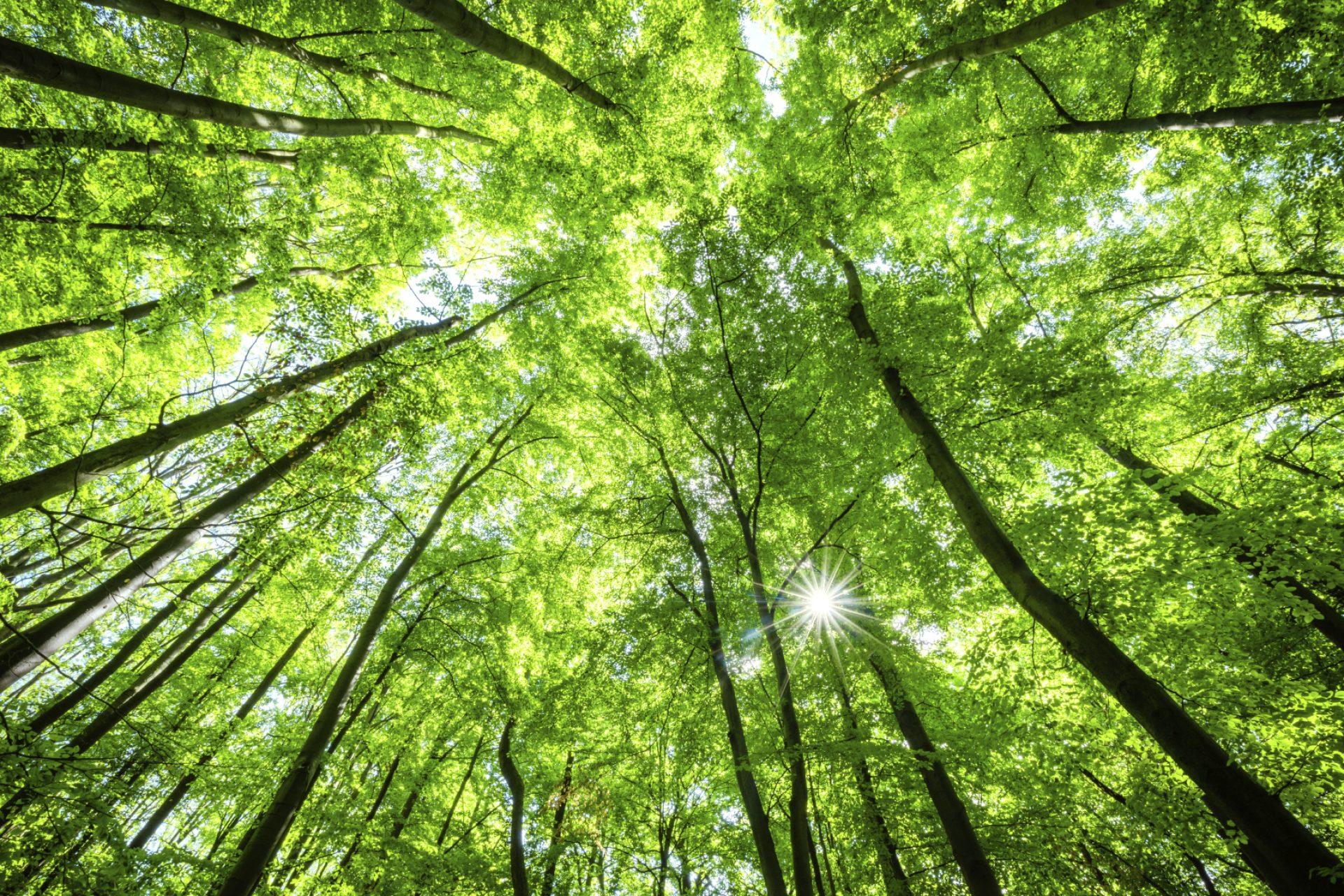 Fotografía de Sostenibilidad NATURALEZA arboles verde recurso BBVA