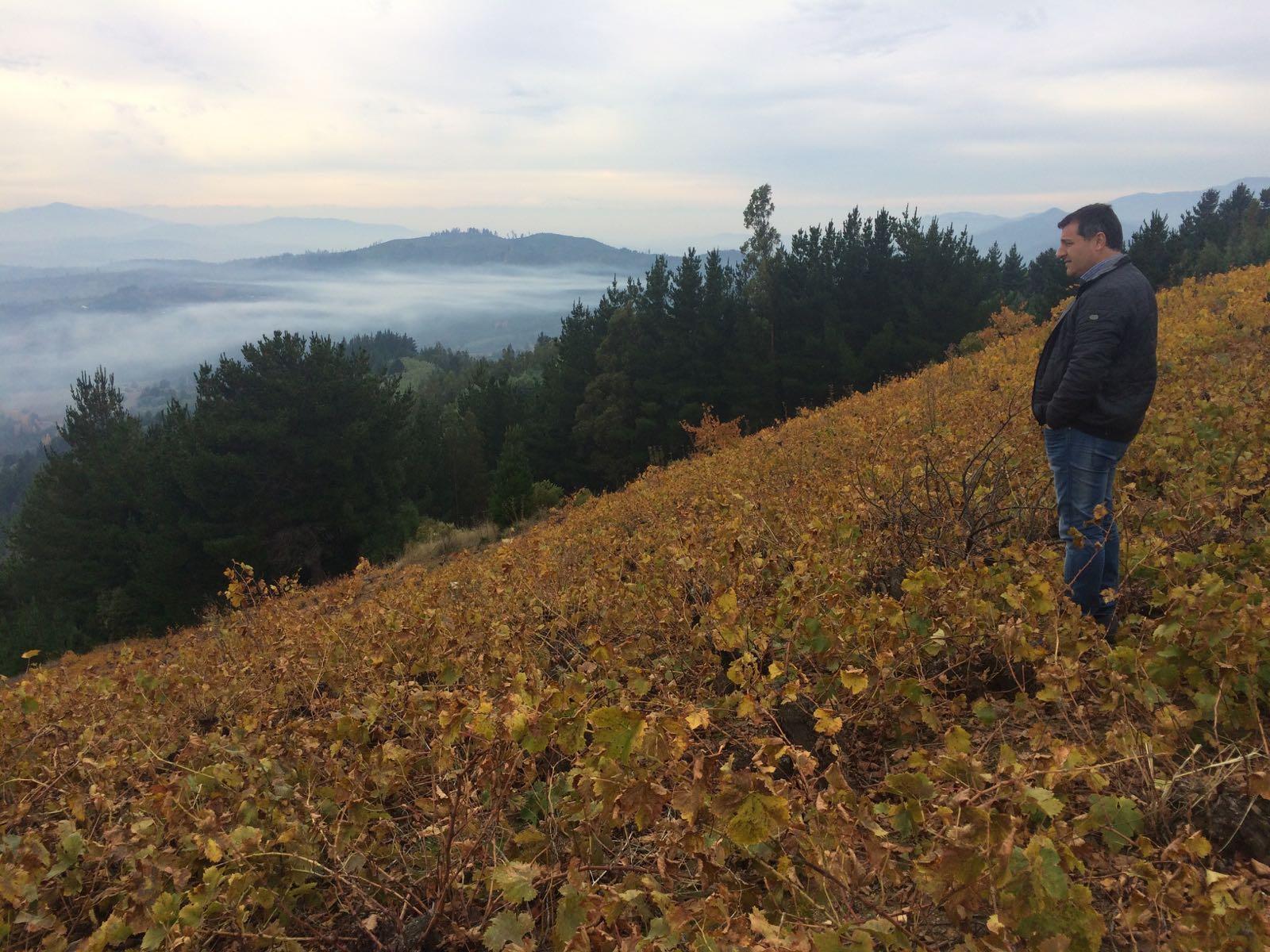Fotografía de Josep Roca observa la vista panorámica del valle del río Itata desde lo alto de una viña salvaje en el municipio de Huarilihue Chile- gira BBVA- El Celler de Can Roca