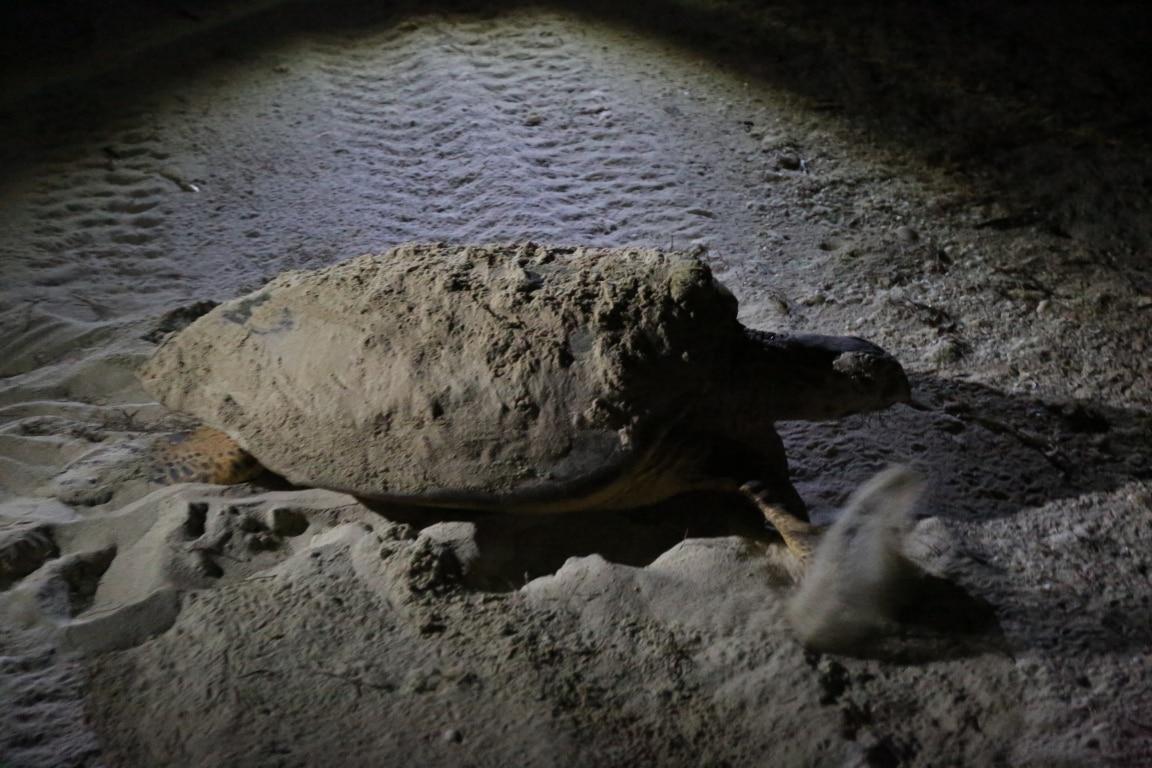 Fotografía de Tortugas en Río Lagartos de Ruta BBVA 2016