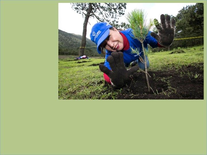 Cuarta reforestación Bancomer