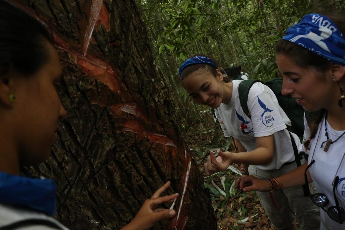 El chicozapote sangra una resina con la que se produce el chicle maya