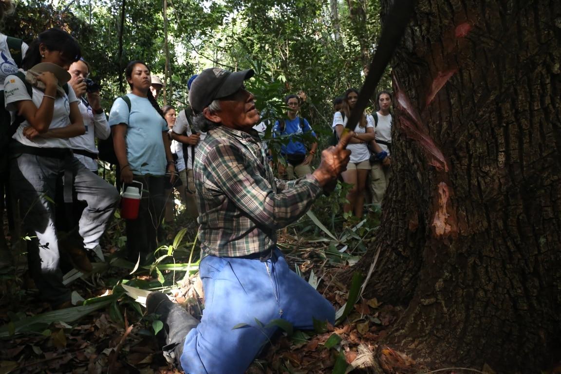 Un chiclero enseña a la Ruta BBVA el proceso de extracción de la materia prima del chicle maya