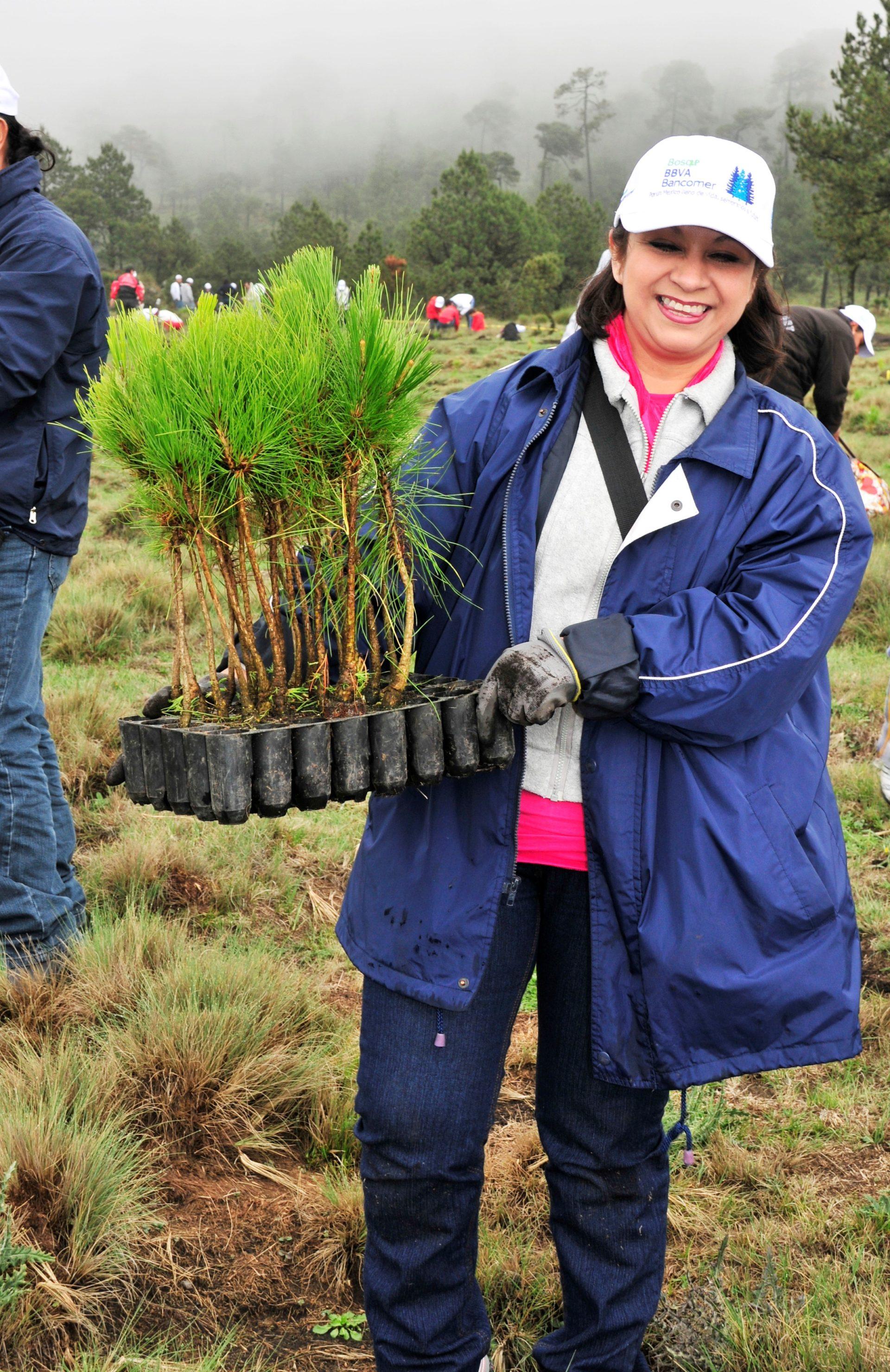 Reforestación Bosque Bancomer