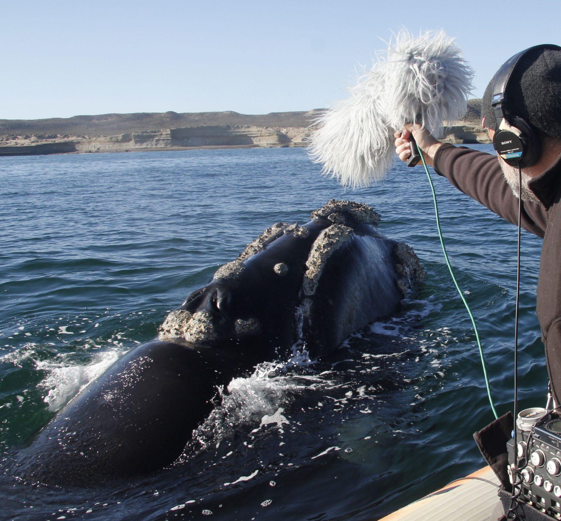 Imagen de Carlos de Hita, Premio Fundación BBVA a la Difusión del Conocimiento en Conservación de la Biodiversidad, grabando una ballena