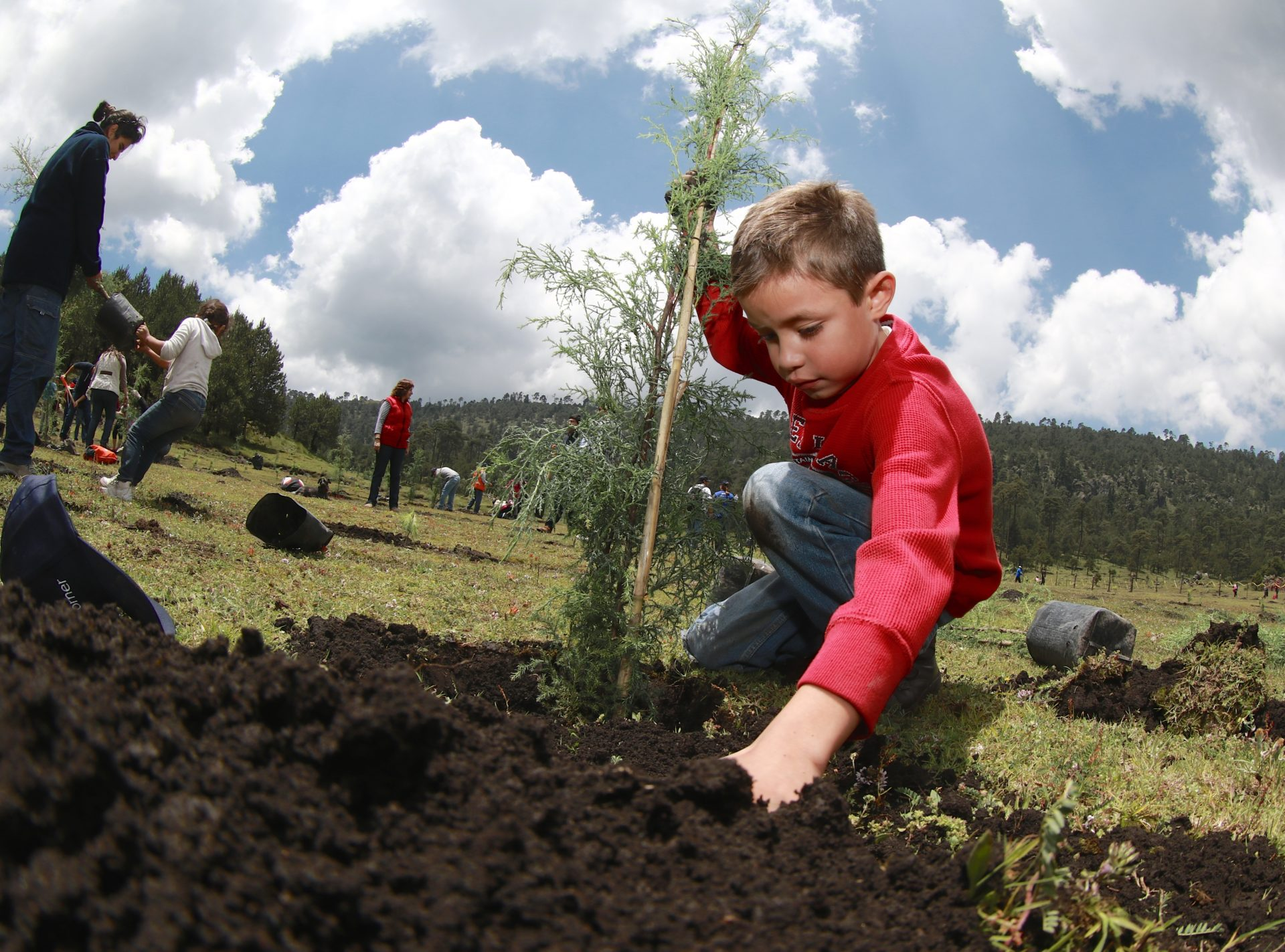 Reforestación Bosque Bancomer 2016