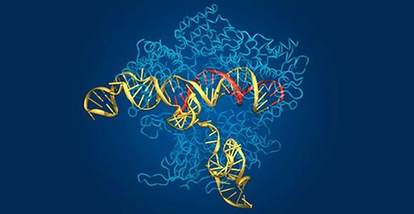 google-genomics-conectara-y-comparara-miles-de-genomas-bbva