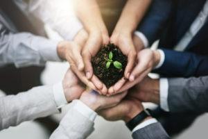 agricultura de precisión-IoT-Internet de las Cosas-revolución verde-campo-producción-planta-productividad-bbva