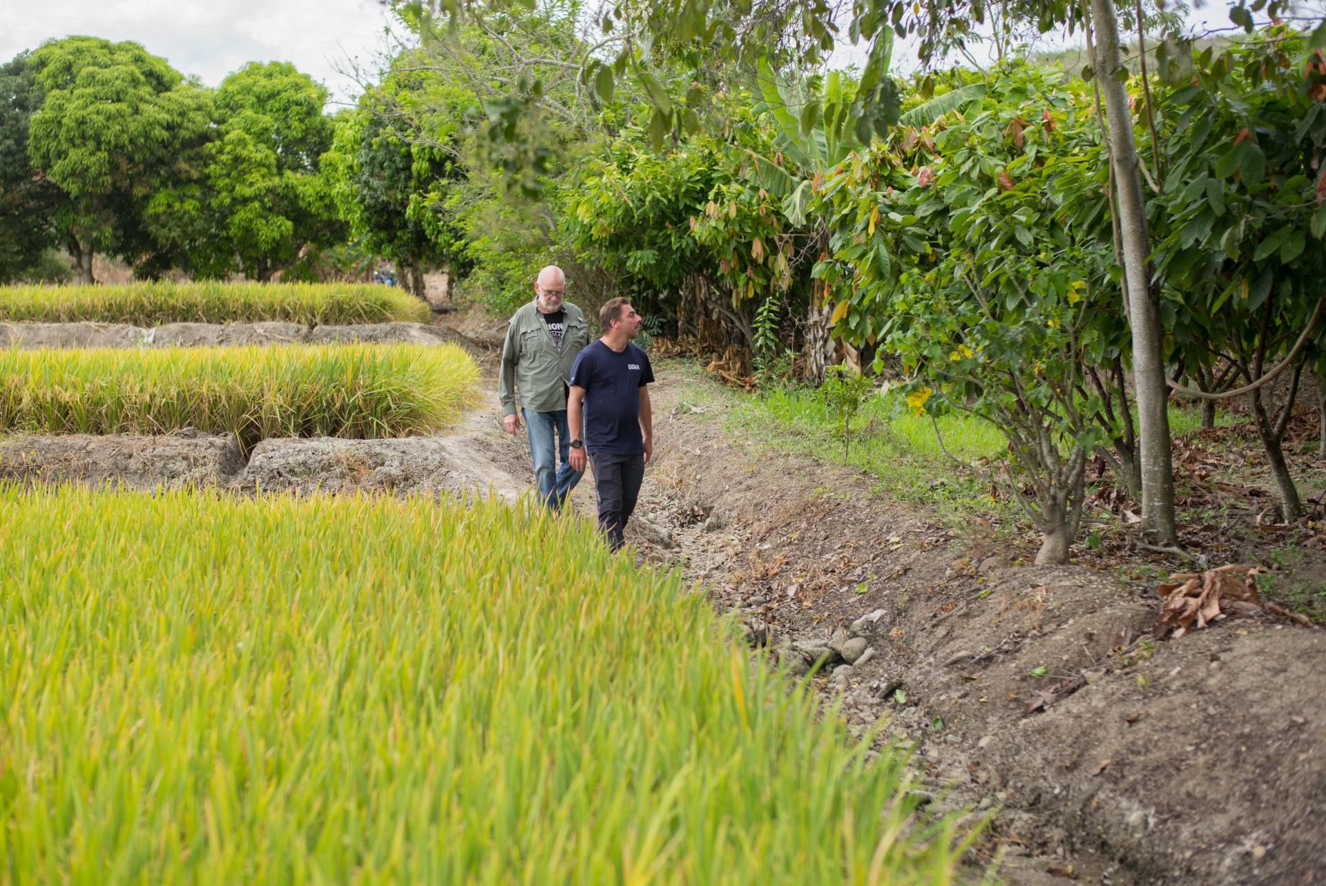 Jordi Roca e Ignacio Medina camina por la linde que separa un arrozal de un cacaotal en la ciudad de Jaén, en la región de Amazonas de Perú