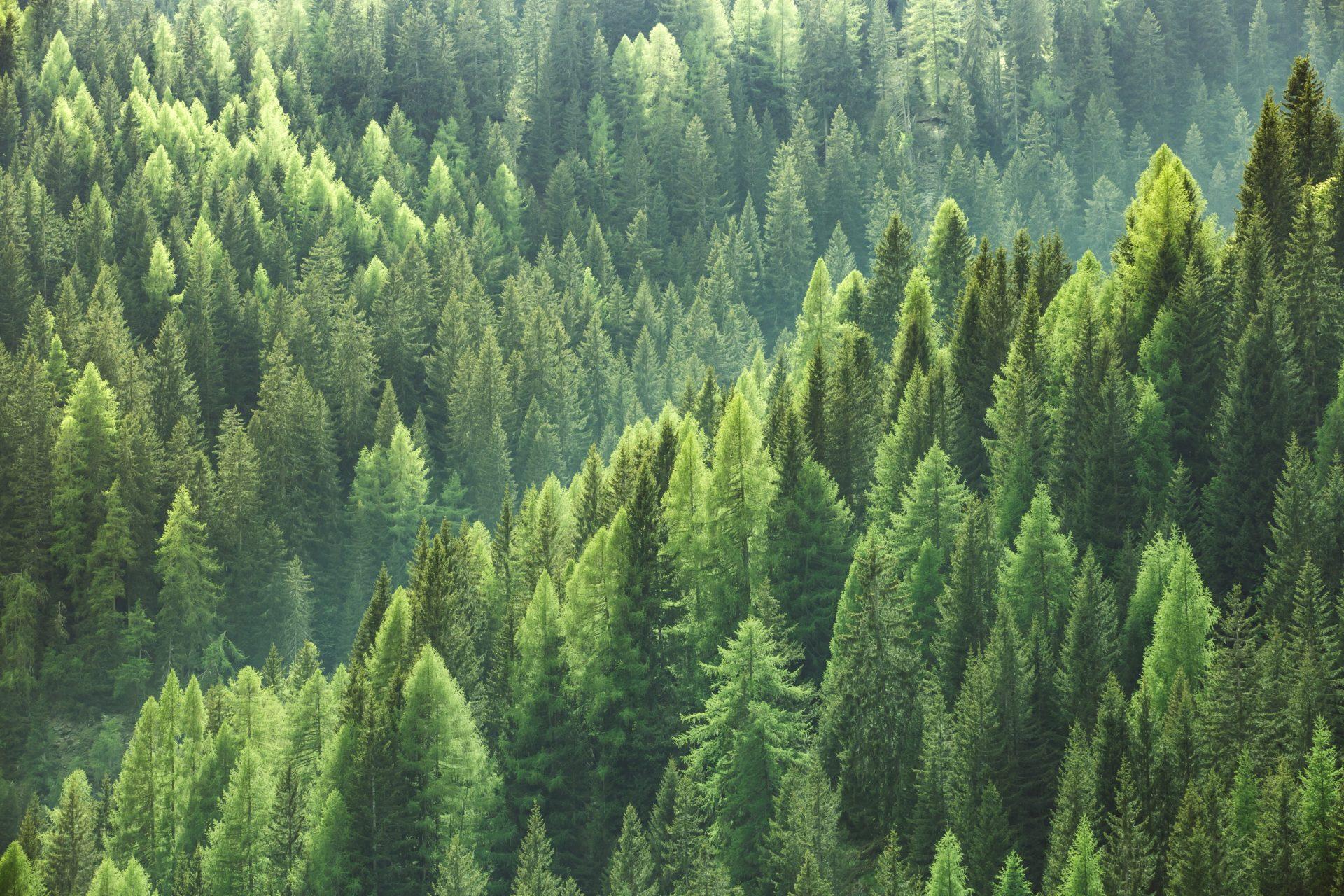 sostenibilidad ecologia recurso