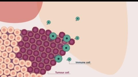 Immunotherapies bbva