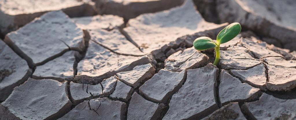 Fotografia de Tierra seca y brote creciendo BBVA