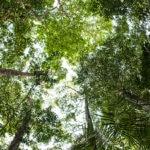 Cambio-Climatico-medioambiente-sostenibilidad-naturaleza-BBVA
