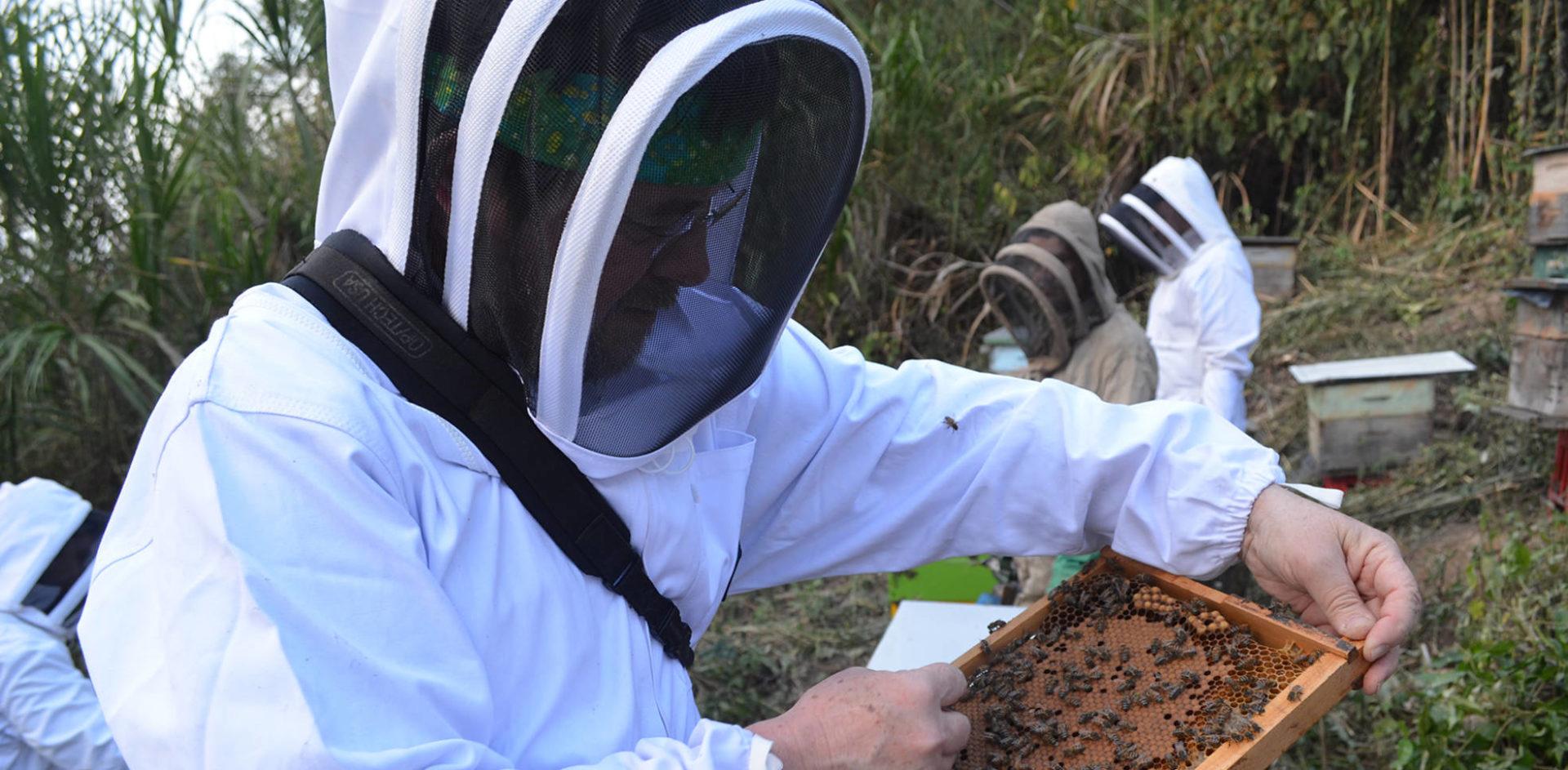 Las-abejas-son-animales-que-producen-alimentos-que-pueden-ser-un-beneficio-para-la-Humanidad