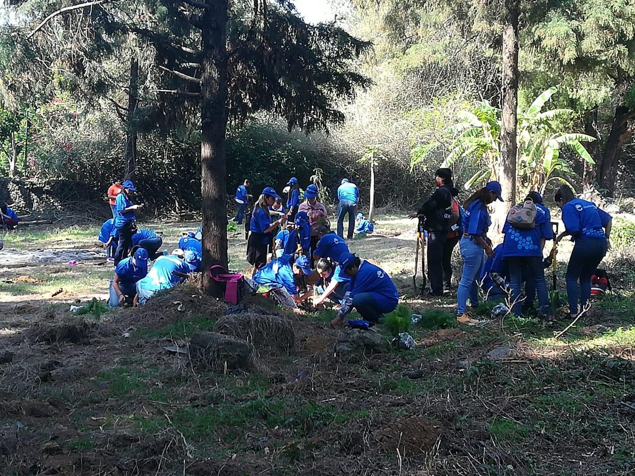 Reforestación Voluntarios BBVA México - Cuernavaca
