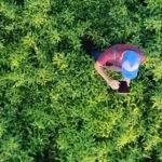 aplicaciones-medioambiente-sostenibilidad-bbva