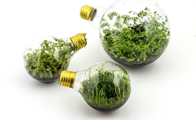 Fotografía de bombillas, plantas, medio ambiente, cambio climático, electricidad, consumo, eficiencia energética, tierra