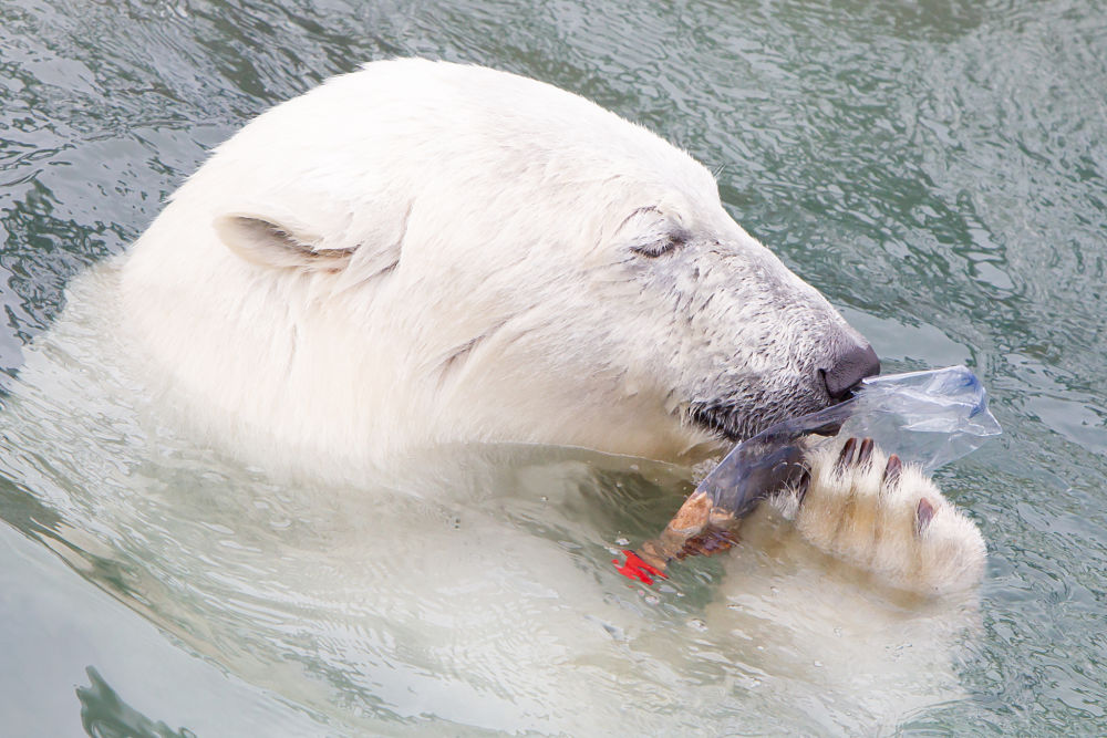 oso-polar-plastico-cambio-climatico-medio-ambiente-bbva