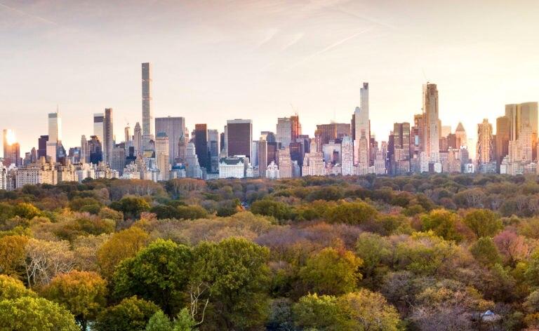 Fotografía de Ciudad, sostenible, verde, bosque, edificios, gris, centro financiero, árbol, medio ambiente