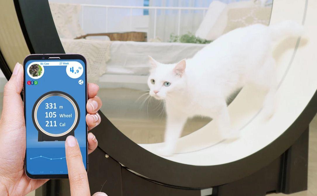 The Little Cat (Pet Ding) - CES 2019 - BBVA