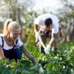 granja-organica-emprendimiento-verde-bbva-momentum