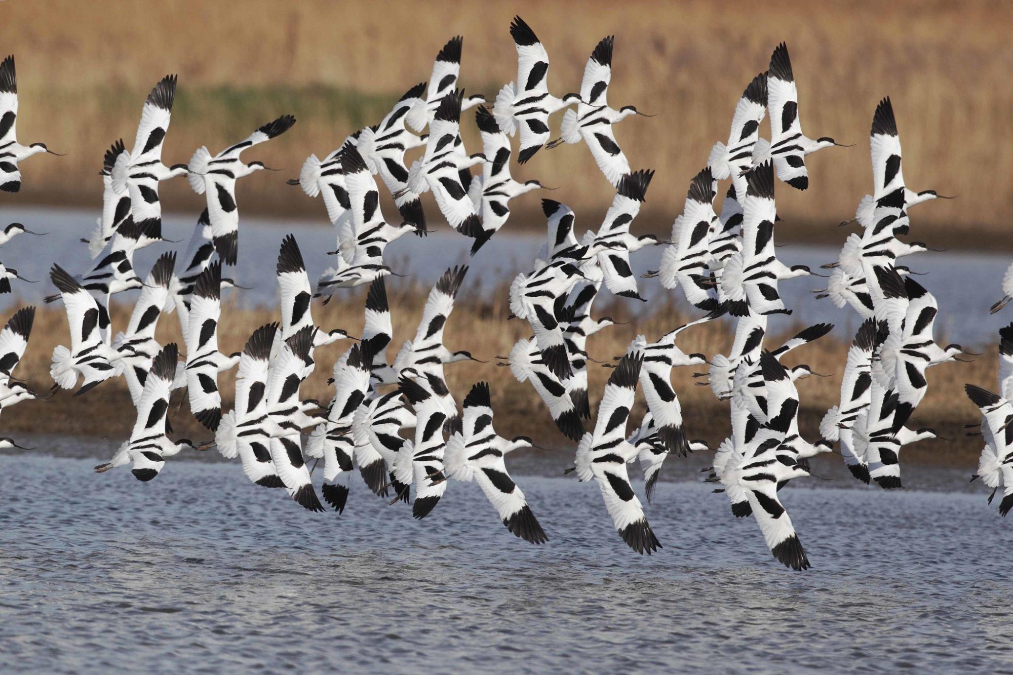 Las Aves De España Migran A Tu Móvil Bbva