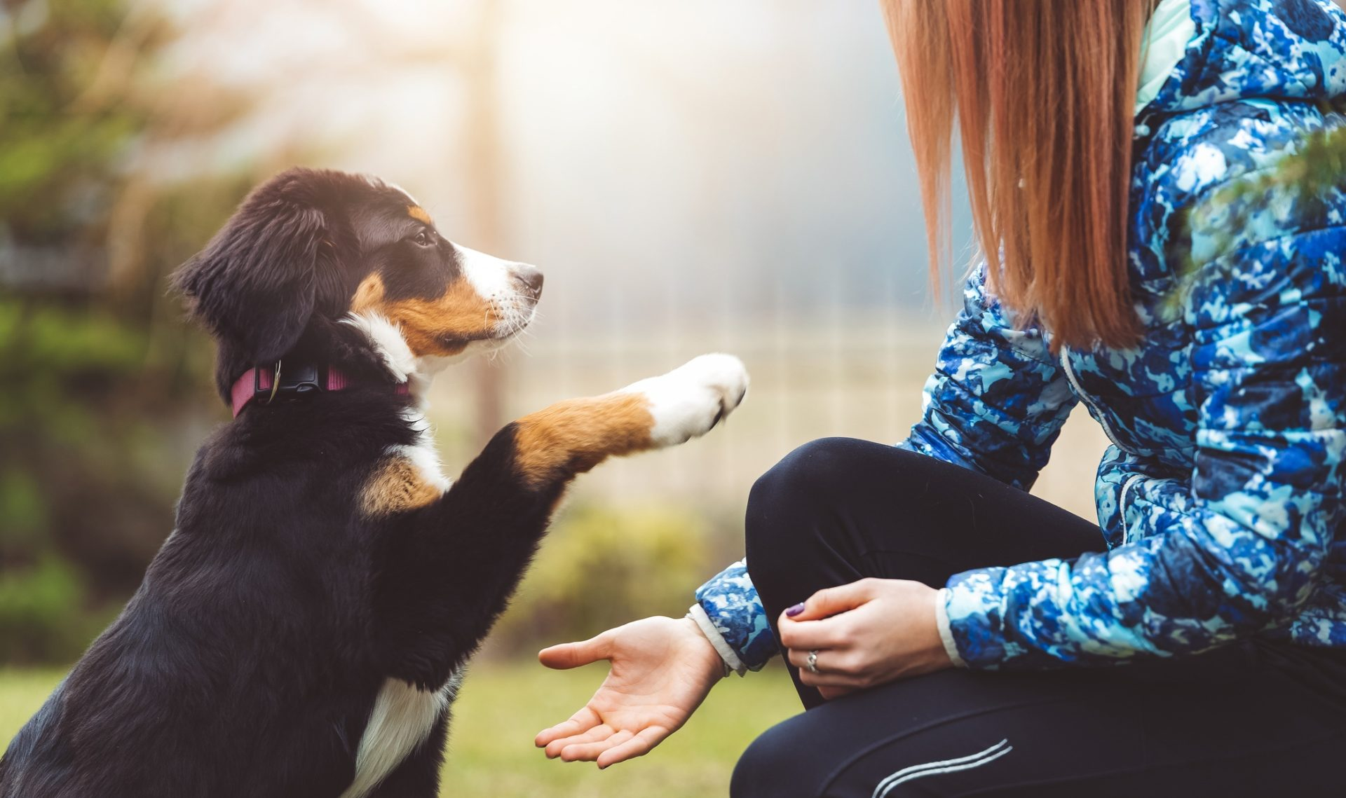 mascota-seguro-obligatorio-bbva-recurso