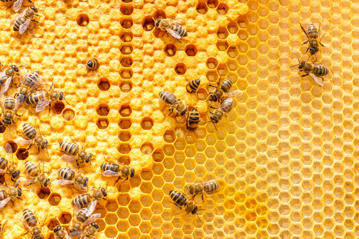 abejas recurso miel bbva