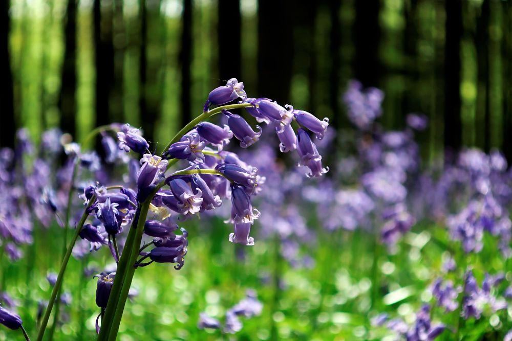 flores-campo-sostenible-banca-responsable-verde-ecologico-sostenibilidad-ods-bbva