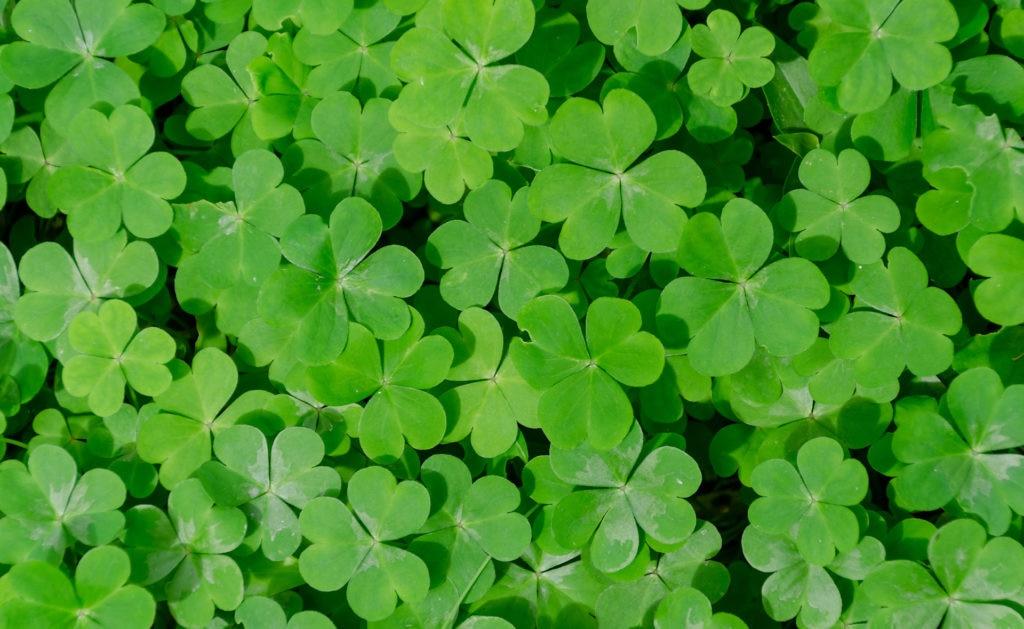 Fotografía de irlanda, verde, plantas, sostenible, medioambiente, trébol