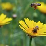 abejas ODS