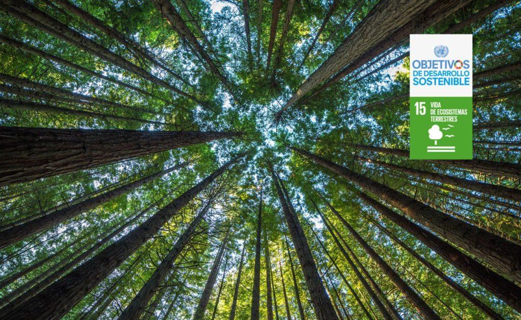 ODS_15_ecosistemas_terrestres_reforestacion_bbva