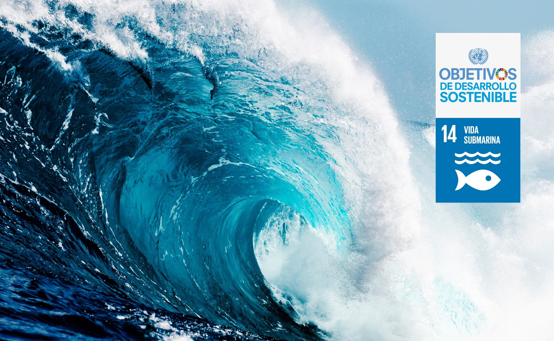 oceanos-mares-cuidado-medioambiente-objetivos-ODS-sostenibilidad-vida-submarina-bbva