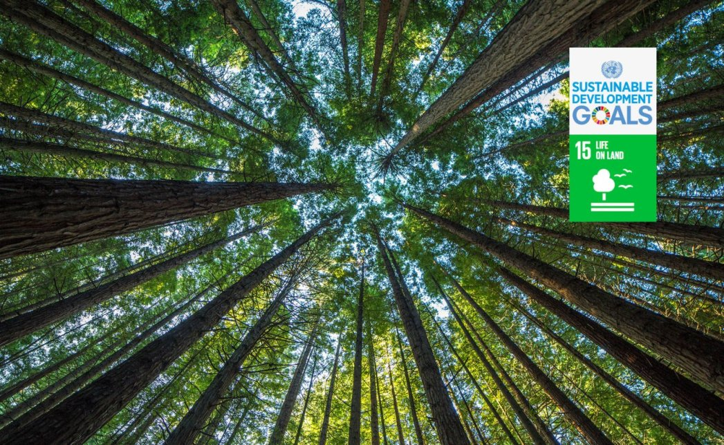 sds_15_forest_ecosystems_reforestation_bbva