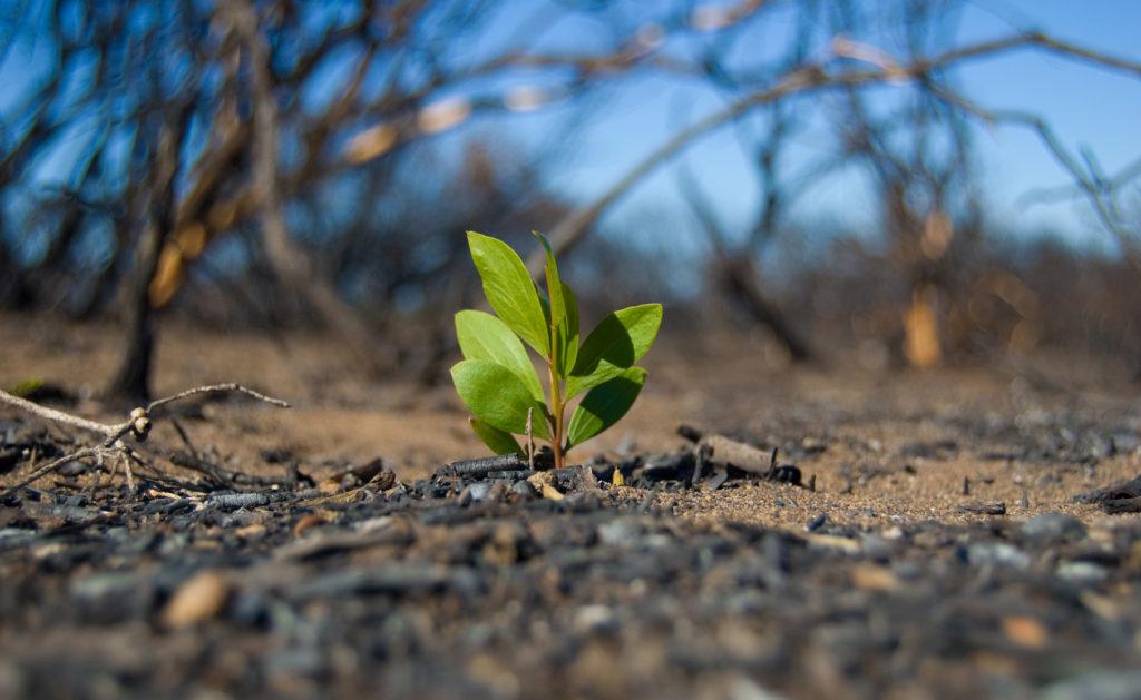 Gran_Canaria_reforestacion_incendio_recurso_bbva