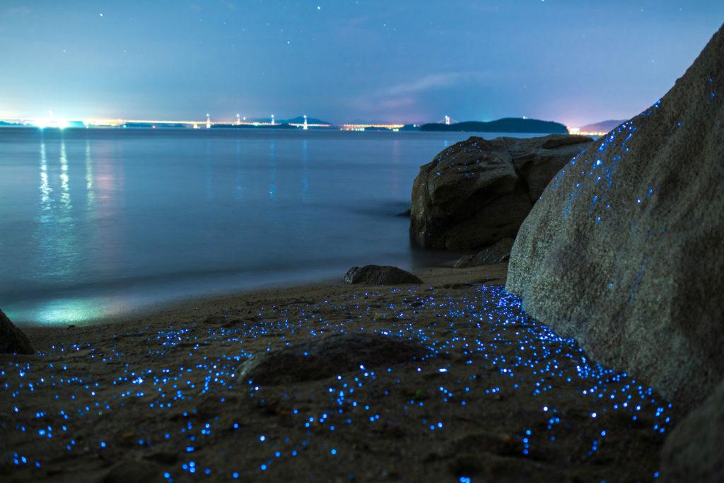 Tres playas para disfrutar de la bioluminiscencia en México