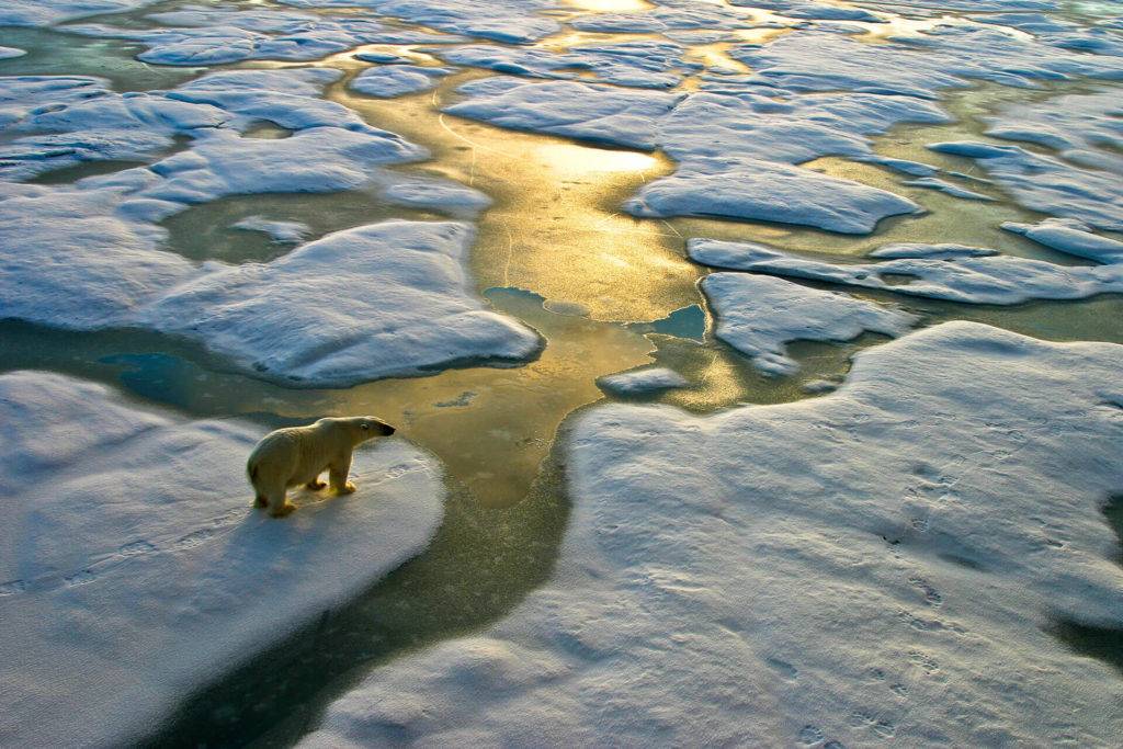 bbva-cambio-climatico-oso-polar-medioambiente-cuidado-planeta-deshielo