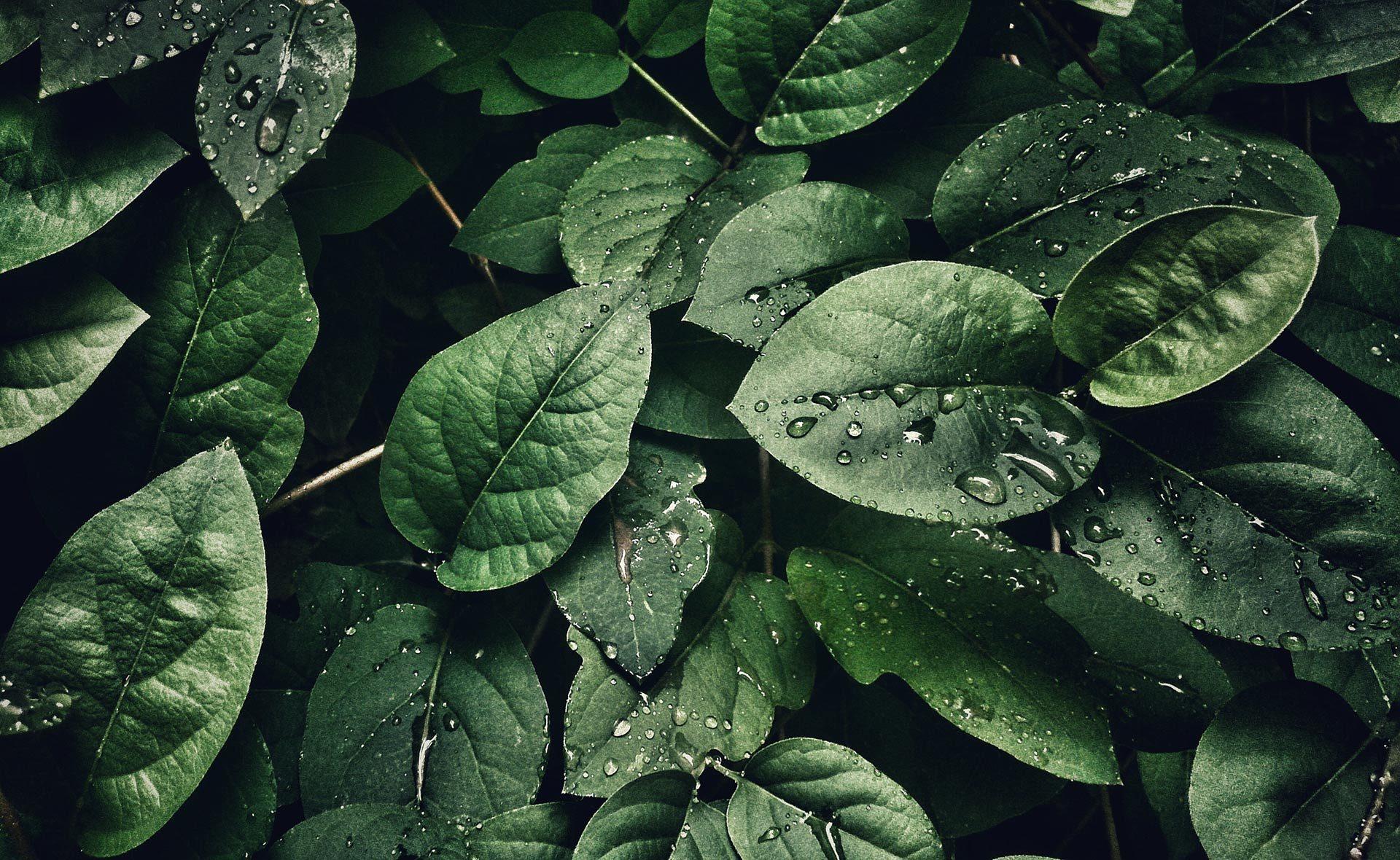 Fotografía de Hojas, gotas, verde, vegetación, sostenibilidad, finanzas sostenibles, naturaleza