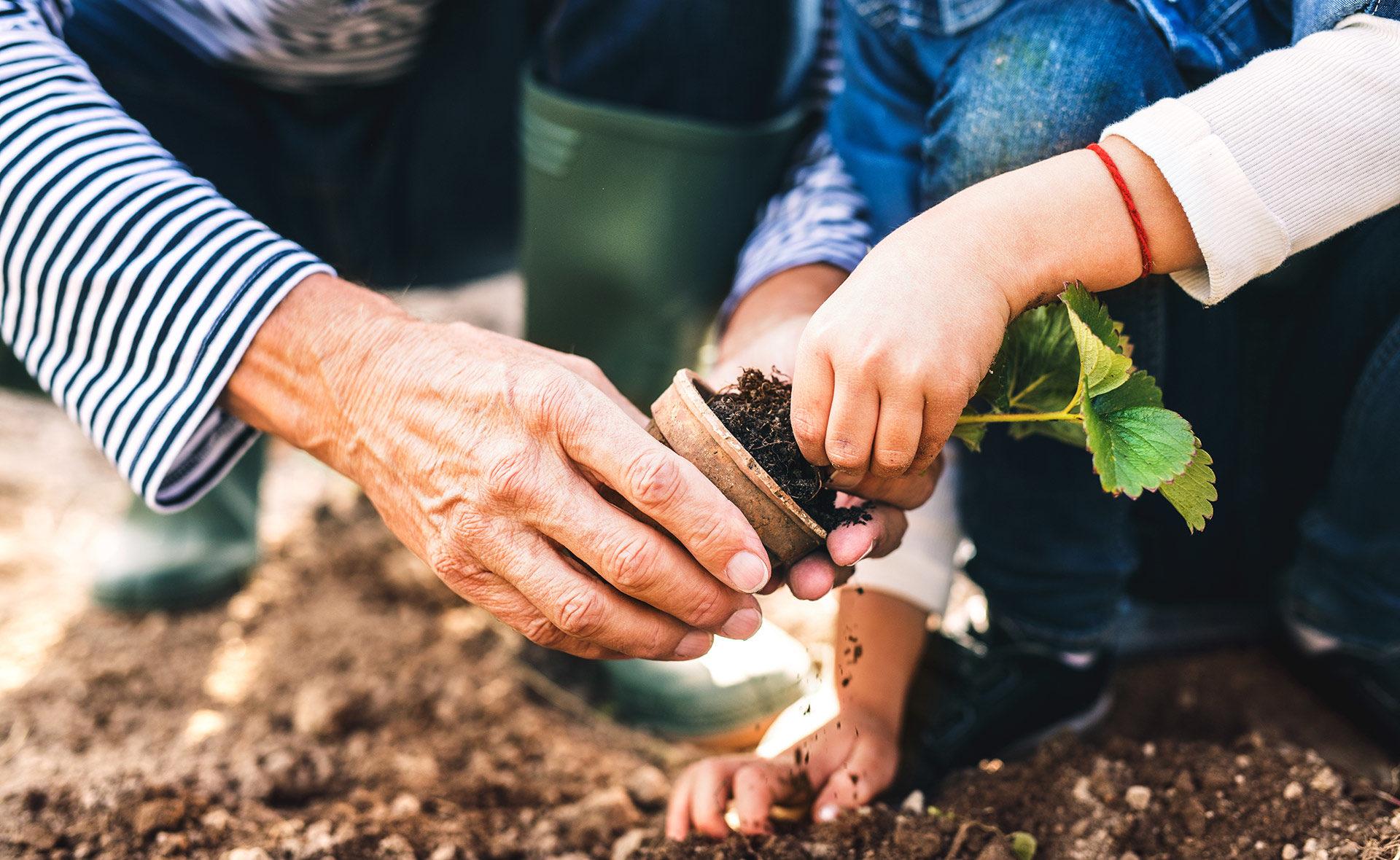 Jubilacion-mercados-sostenibilidad- plantar- medio ambiente- tierra-planta