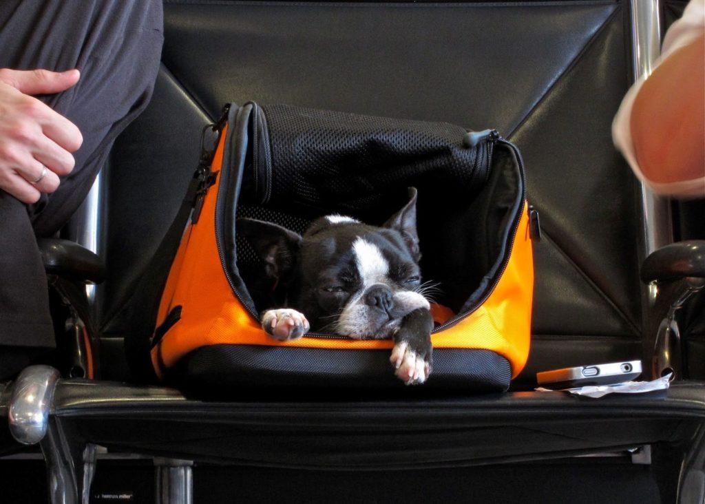 viajar con mascota