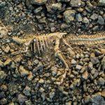 BBVA-OpenMind-Dinosaurios-extinción-historia
