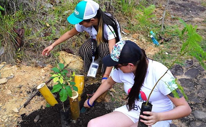 Voluntarios 2 - BBVA Siembra de árboles