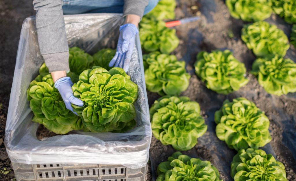 consumo_responsable-naturaleza-alimentos-sostenibilidad-huerto