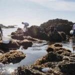Recolección de algas 2 - Sacha Hormaechea